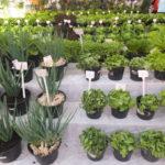 Pavilhão Agrícola este ano ficou maior (Aldo Shiguti)